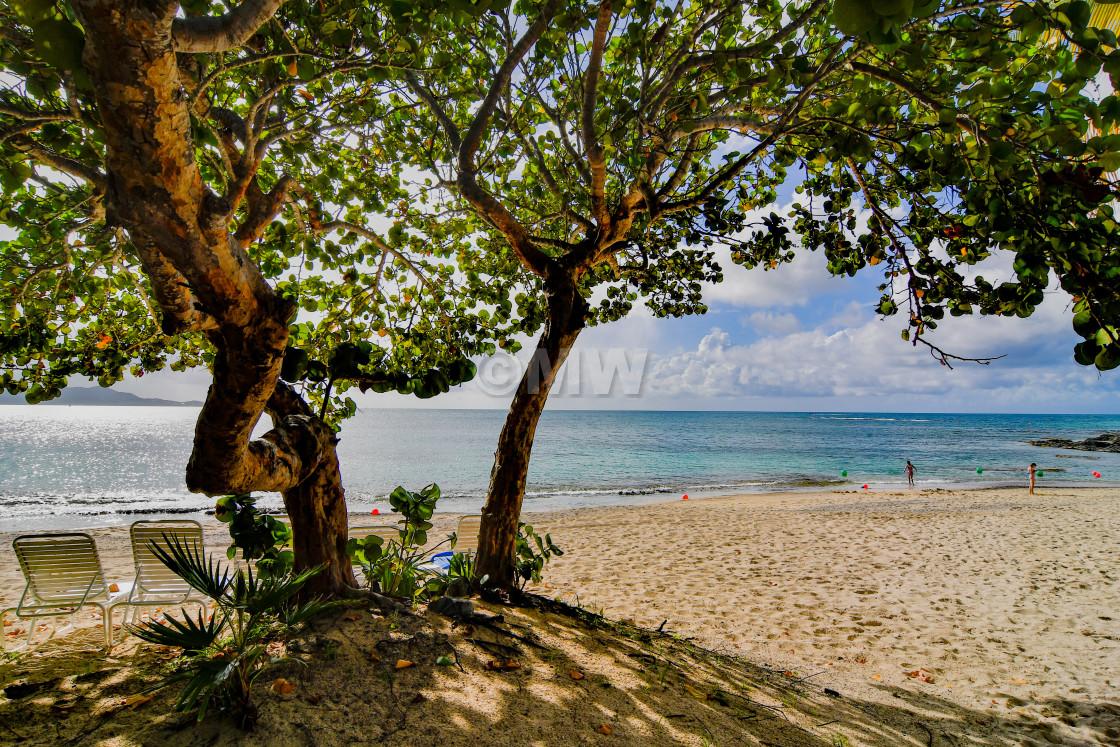 """Mermaid Beach, Buccaneer Hotel & Sea Grape Tree"" stock image"
