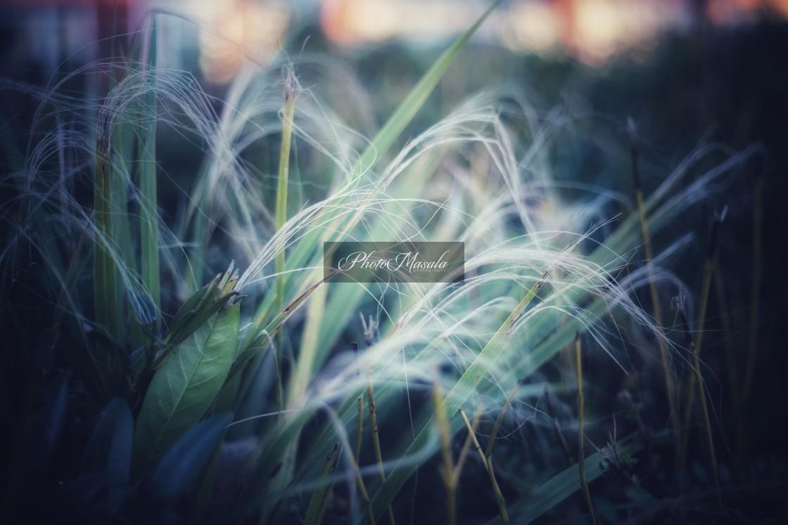 """Grass"" stock image"