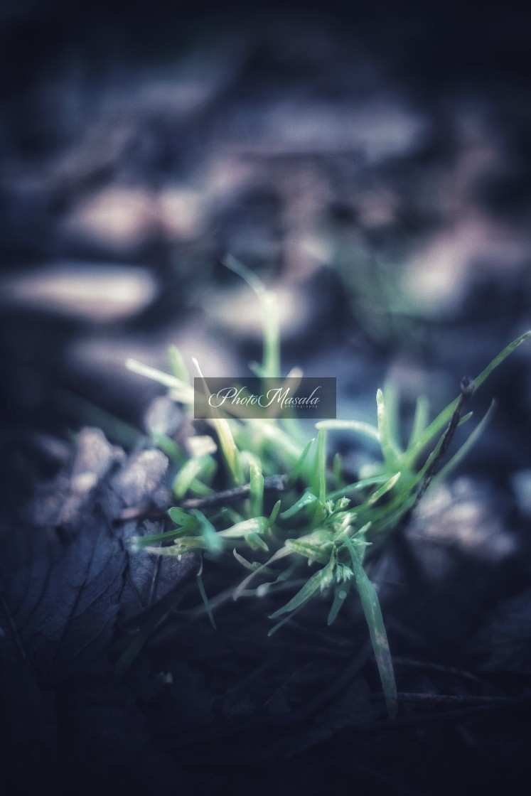"""""""Abstract grass"""" stock image"""