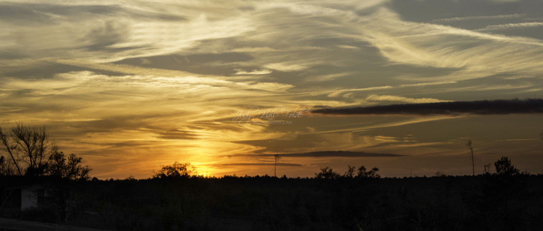"""""""Sunset in the Ocala National Forest"""" stock image"""