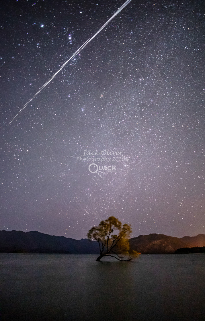 """Starlit Wanaka Tree"" stock image"