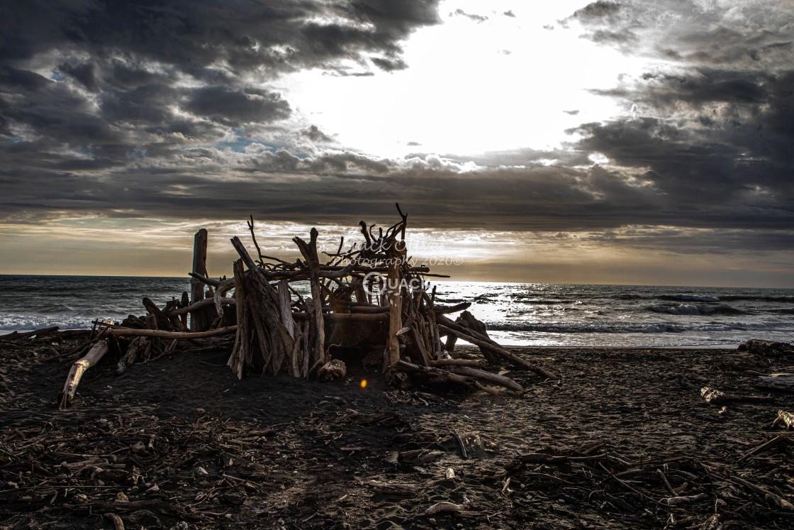"""Driftwood Beach"" stock image"