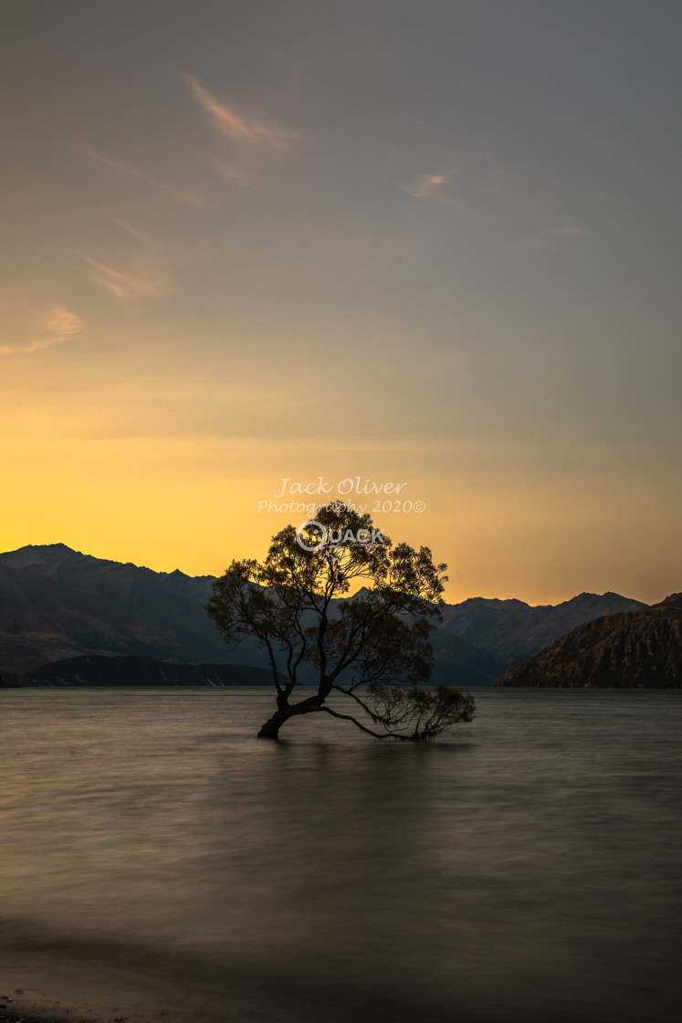 """""""The Wanaka Tree and the Golden Sunset"""" stock image"""