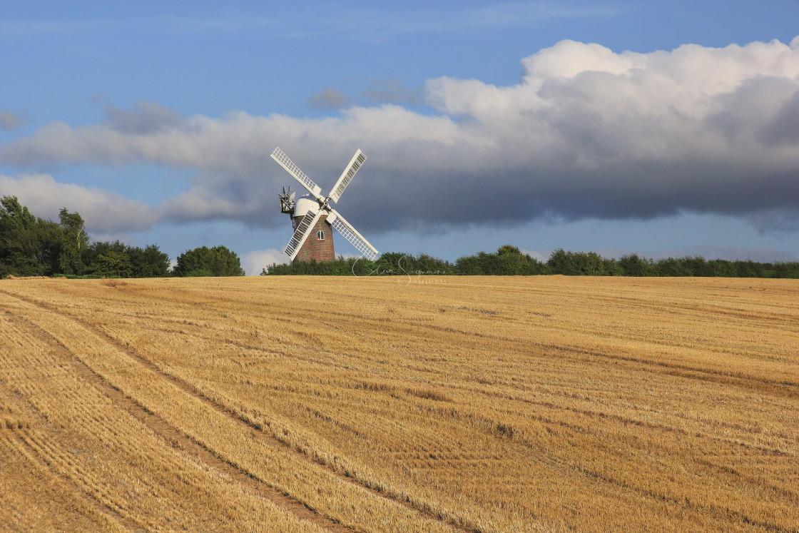 """Windmill and corn field, Wilton, Wiltshire."" stock image"