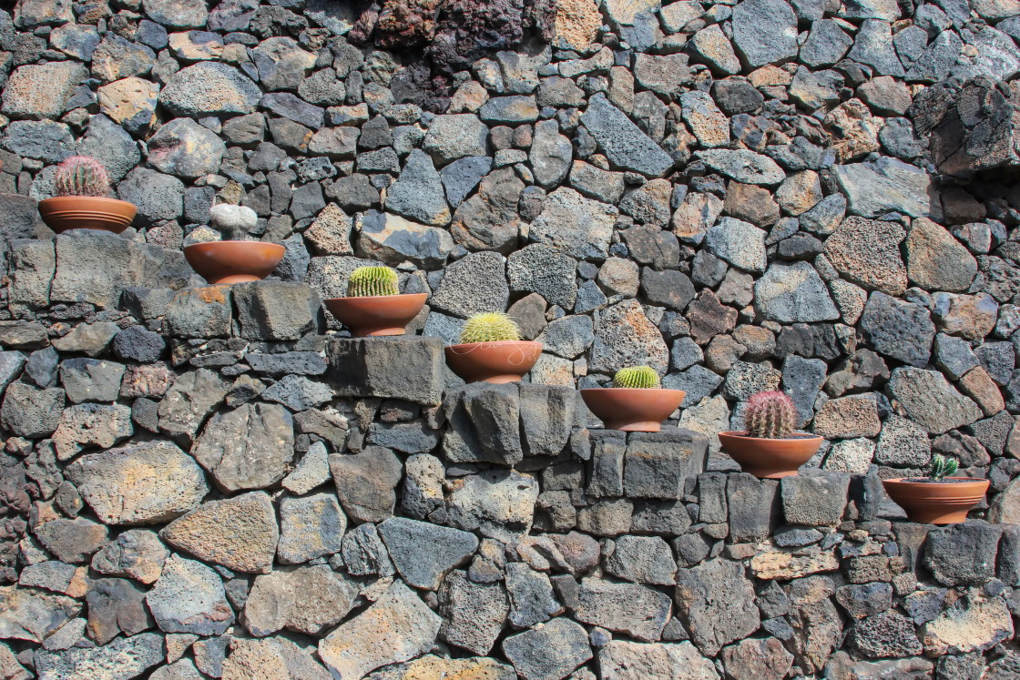 """""""Pots of Cacti on stone steps"""" stock image"""