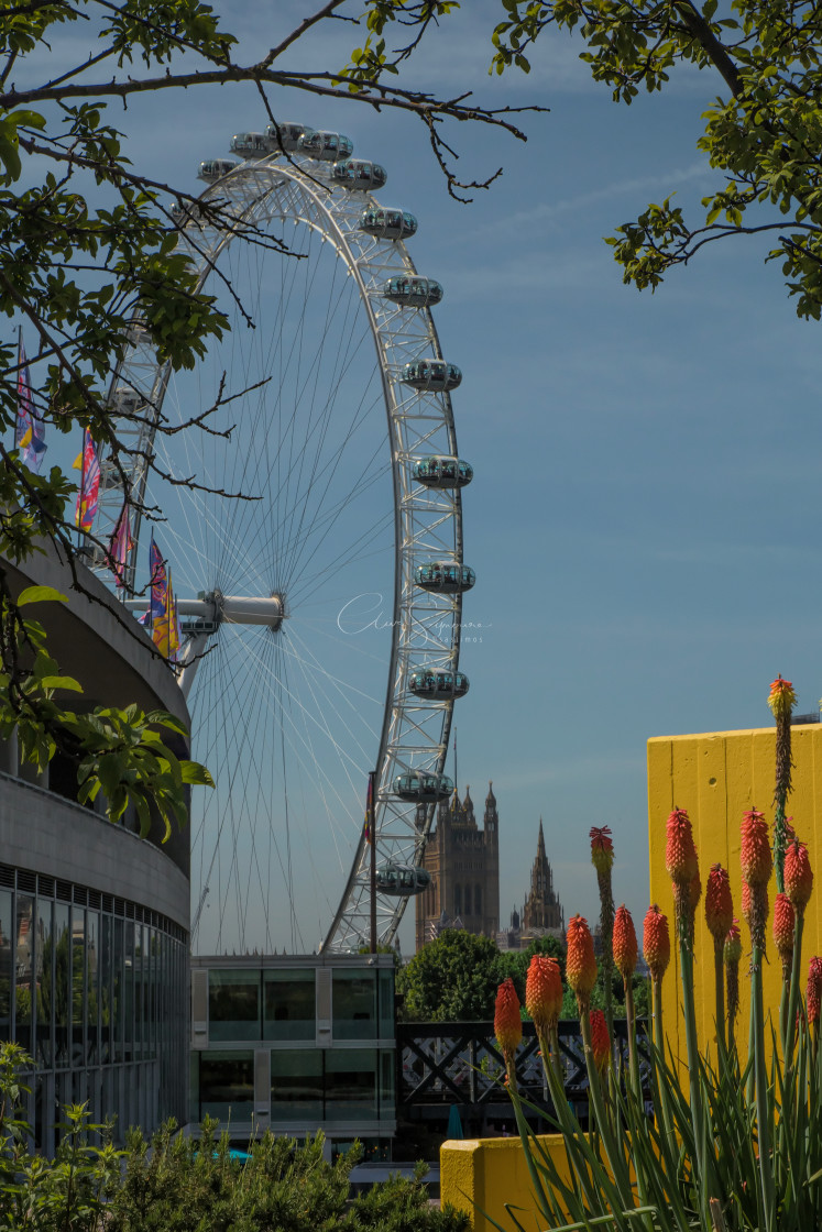 """""""The London Eye from the South Bank Centre"""" stock image"""