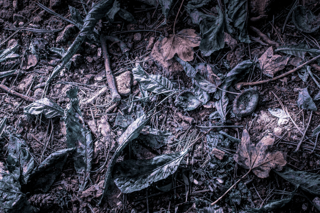 """Abstract take on fallen leaves"" stock image"