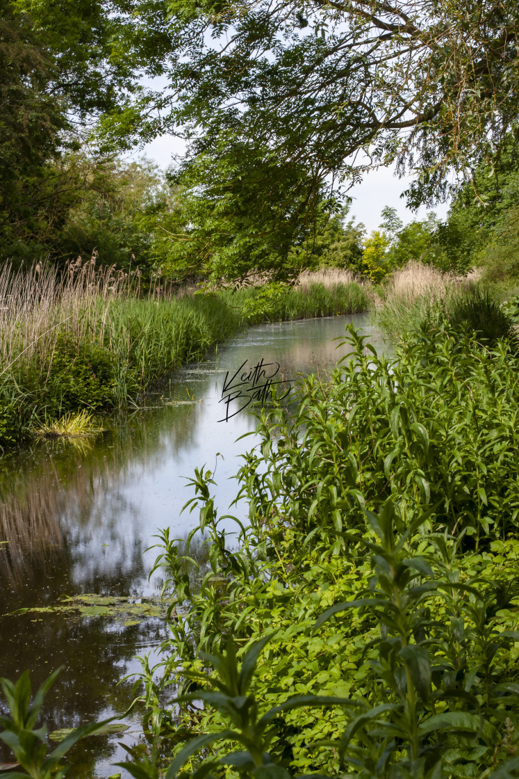 """""""River scene Anglesey Abbey"""" stock image"""