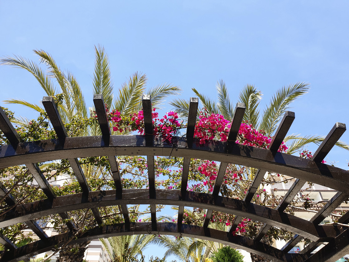 """Palms and flowers on wooden archway"" stock image"