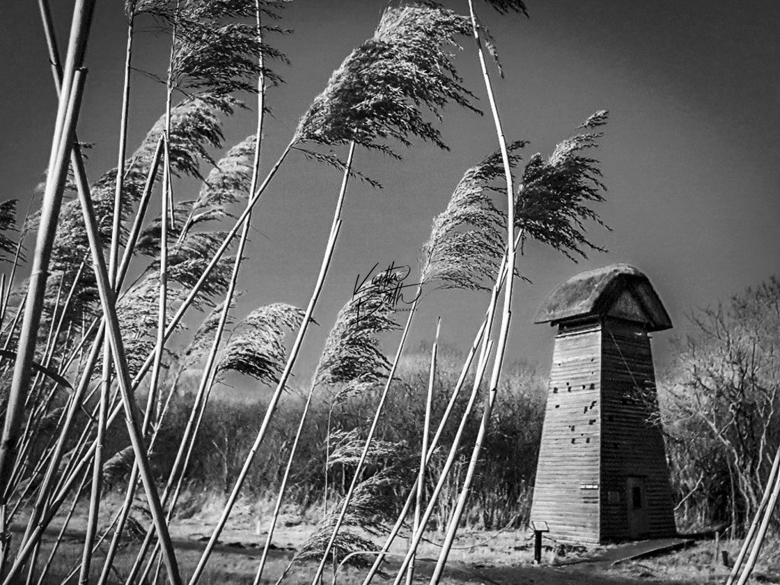 """Wicken Fen Tower Hide"" stock image"