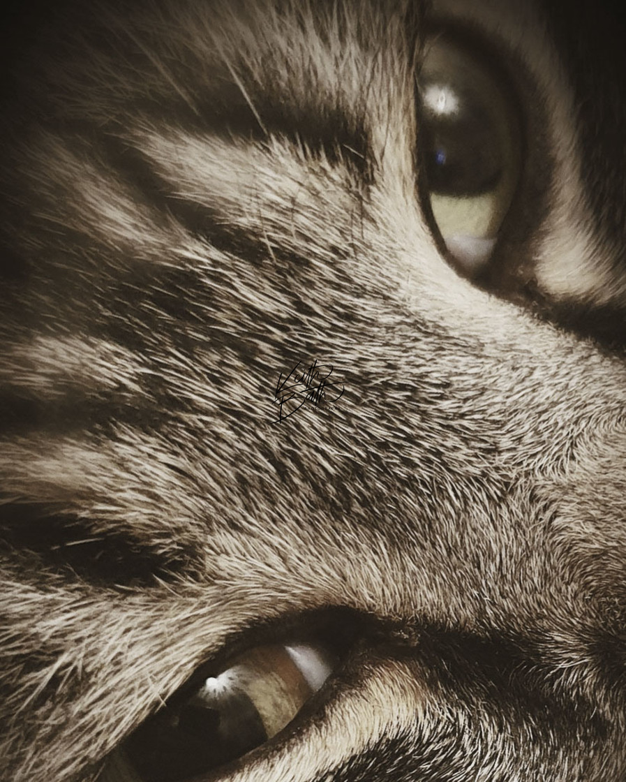 """Cats Eyes"" stock image"