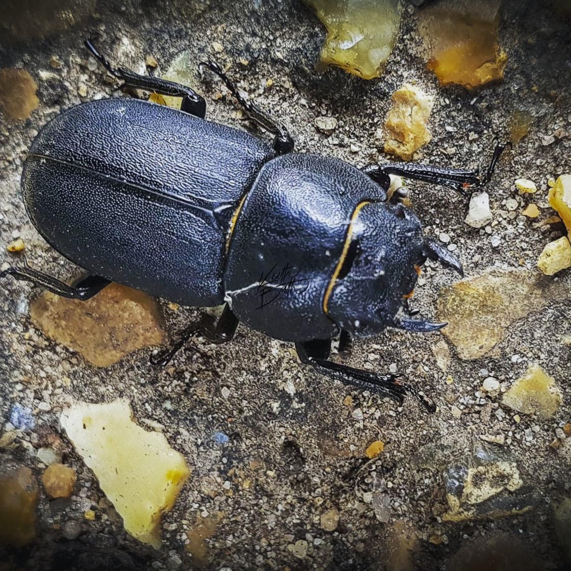 """""""Beetle on stones"""" stock image"""