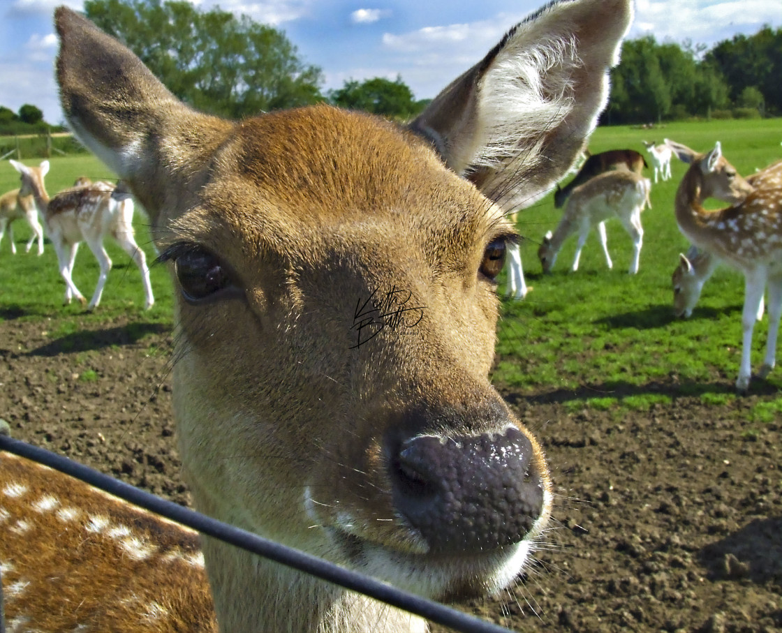 """Close up of young deer"" stock image"