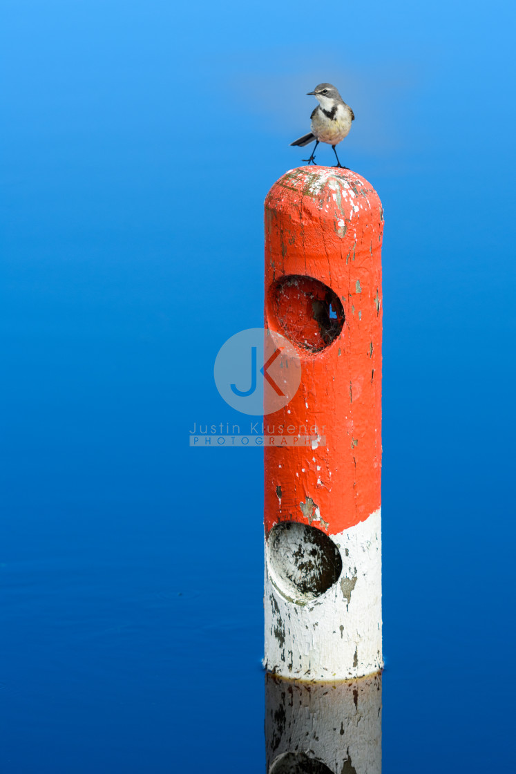 """""""Wagtail on Red Pole"""" stock image"""