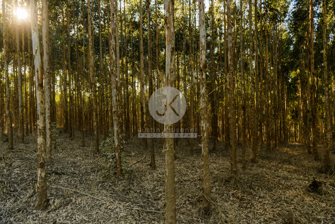 """Tree Plantation"" stock image"