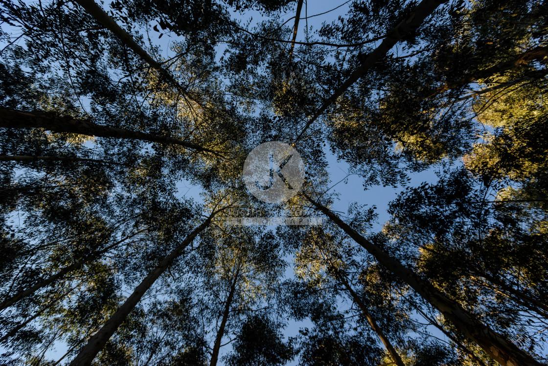 """""""Tree Plantation canopy"""" stock image"""