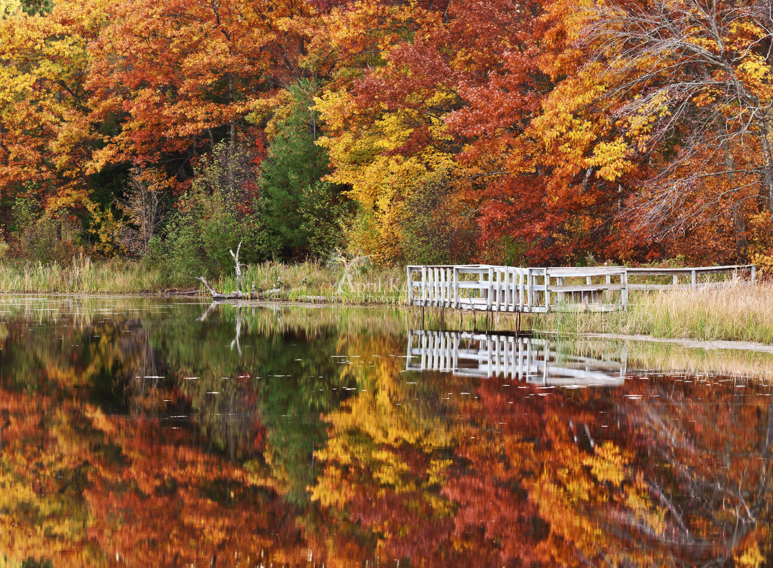 """Fall Colors at Lake Shumway"" stock image"