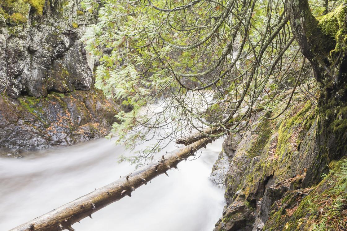"""Fallen Tree & Cedar Cascade River"" stock image"