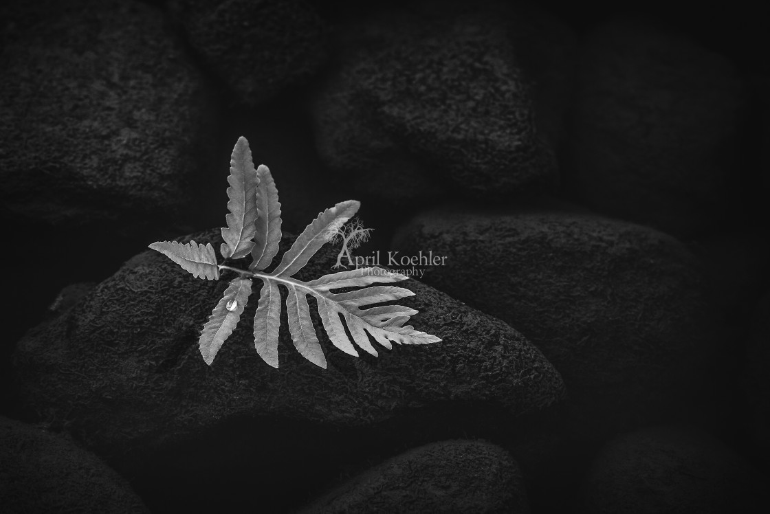 """River Leaf"" stock image"
