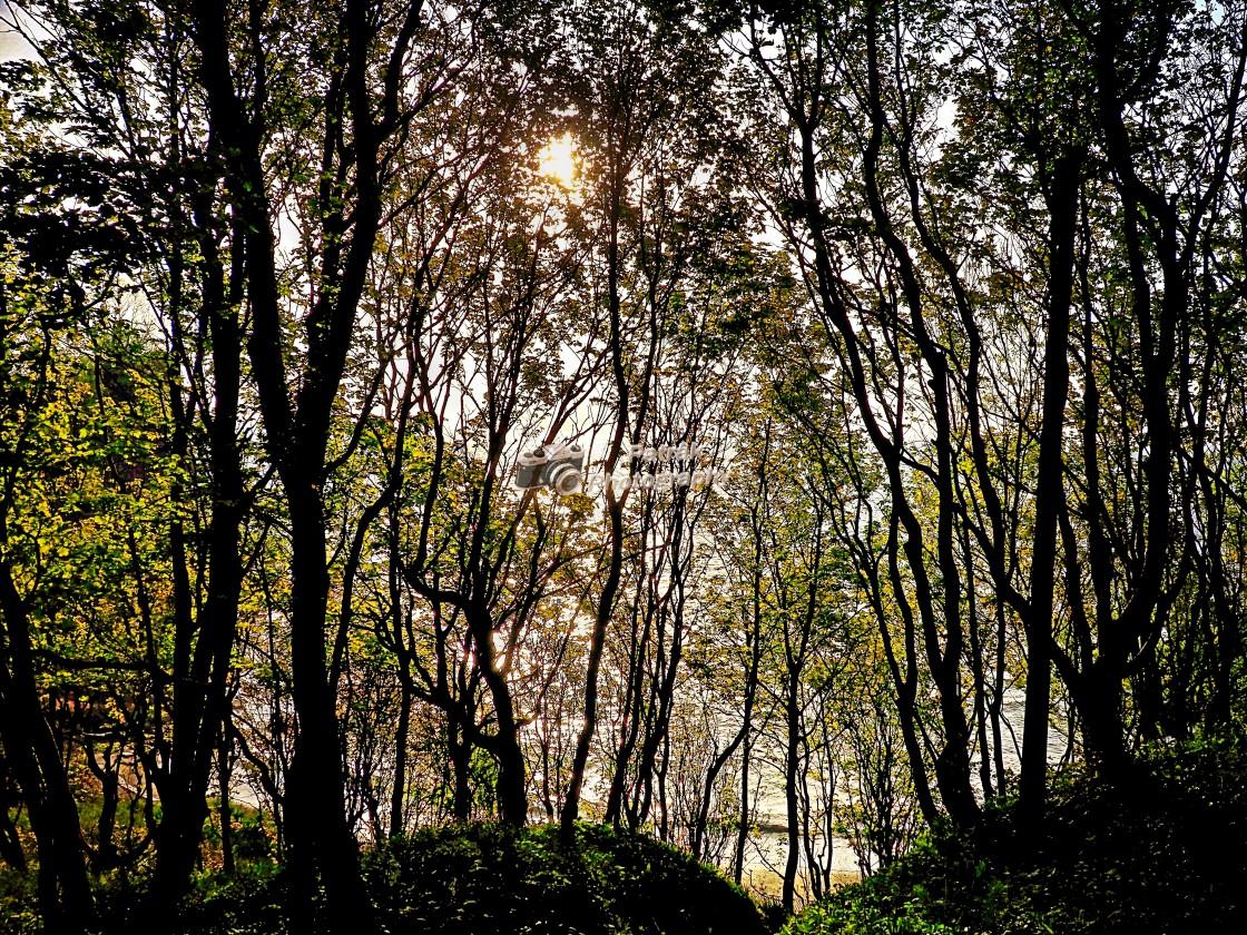 """""""Coastal Woodland"""" stock image"""