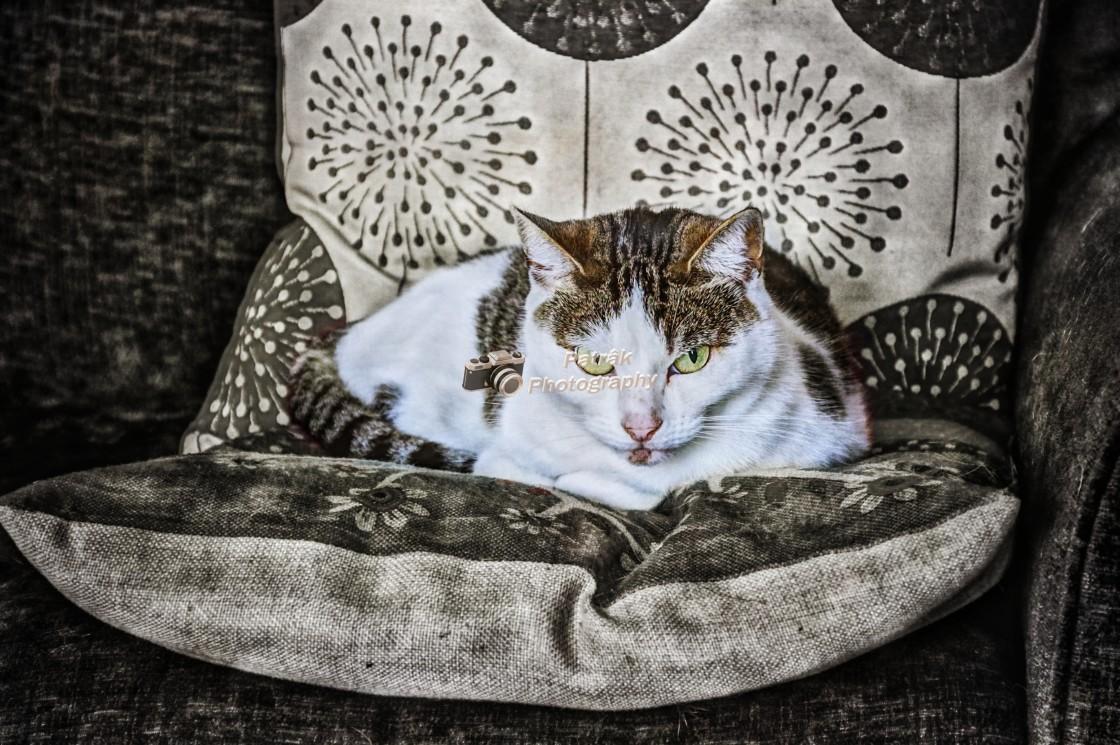 """Grumpy Looking Cat"" stock image"