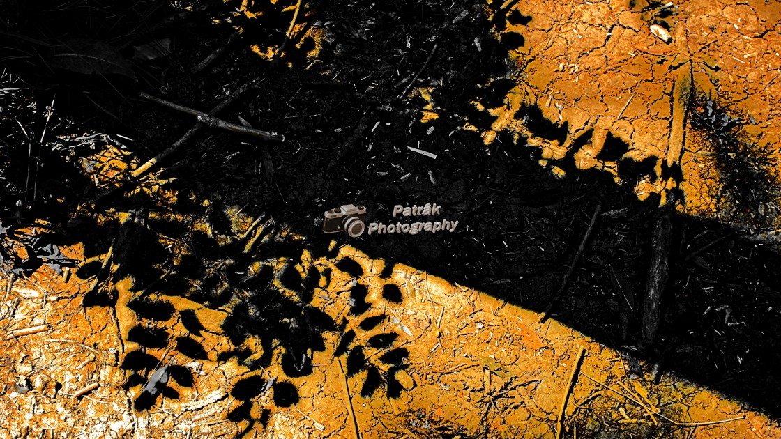 """""""Tree Silhouette/Shadow"""" stock image"""