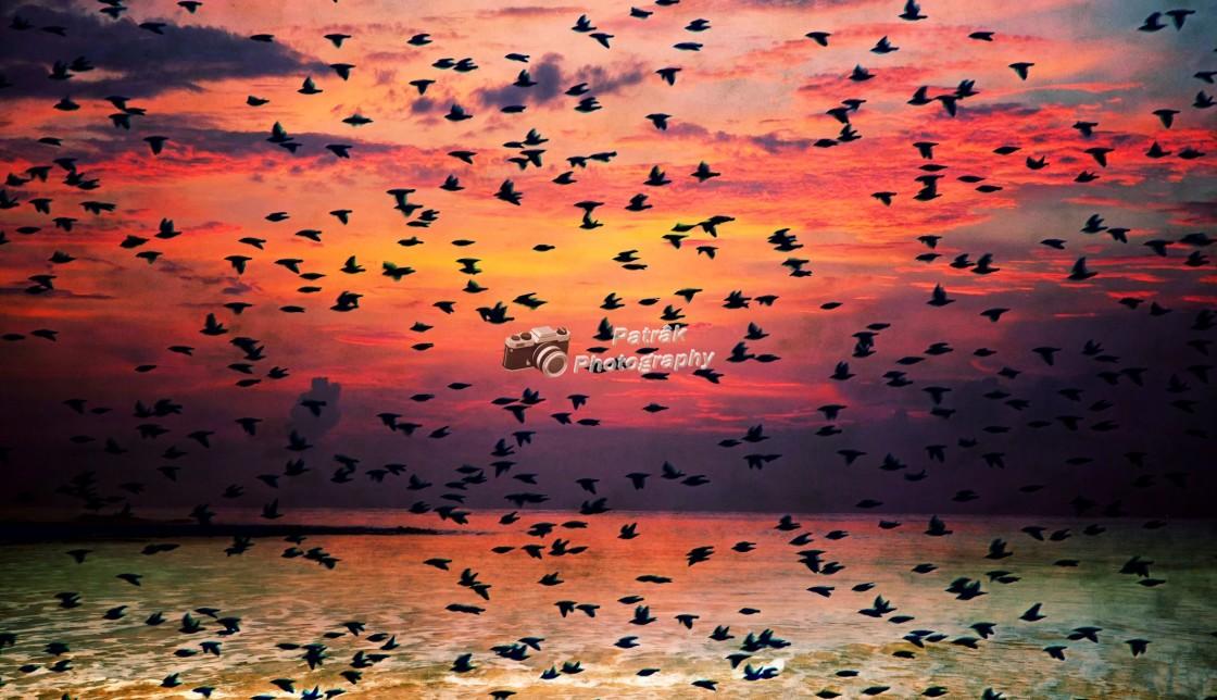 """Crow Sunset Murmuration"" stock image"