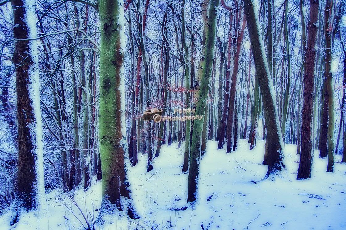 """Drews Pond Copse - Devizes, Wiltshire, England"" stock image"