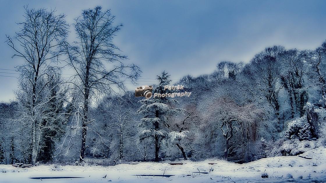 """Drews Pond Trees - Devizes, Wiltshire, England"" stock image"