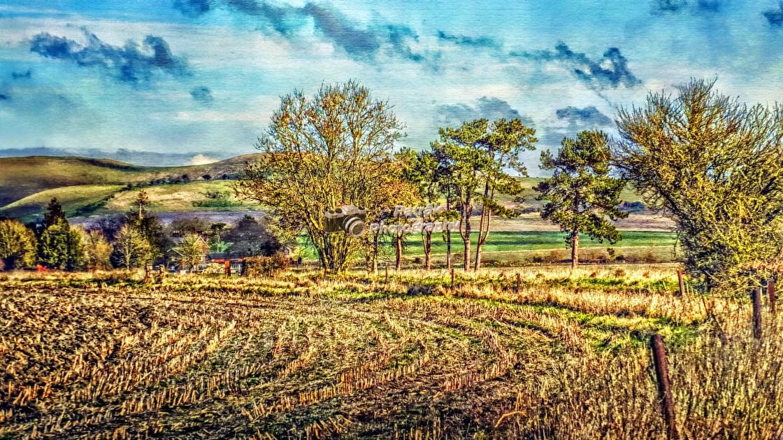 """""""Wiltshire Farmland"""" stock image"""