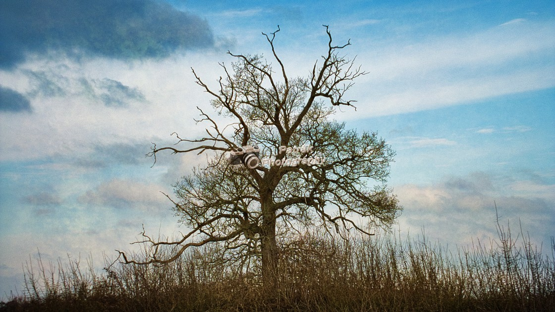 """""""Tree Against A Delicate Winter's Sky"""" stock image"""