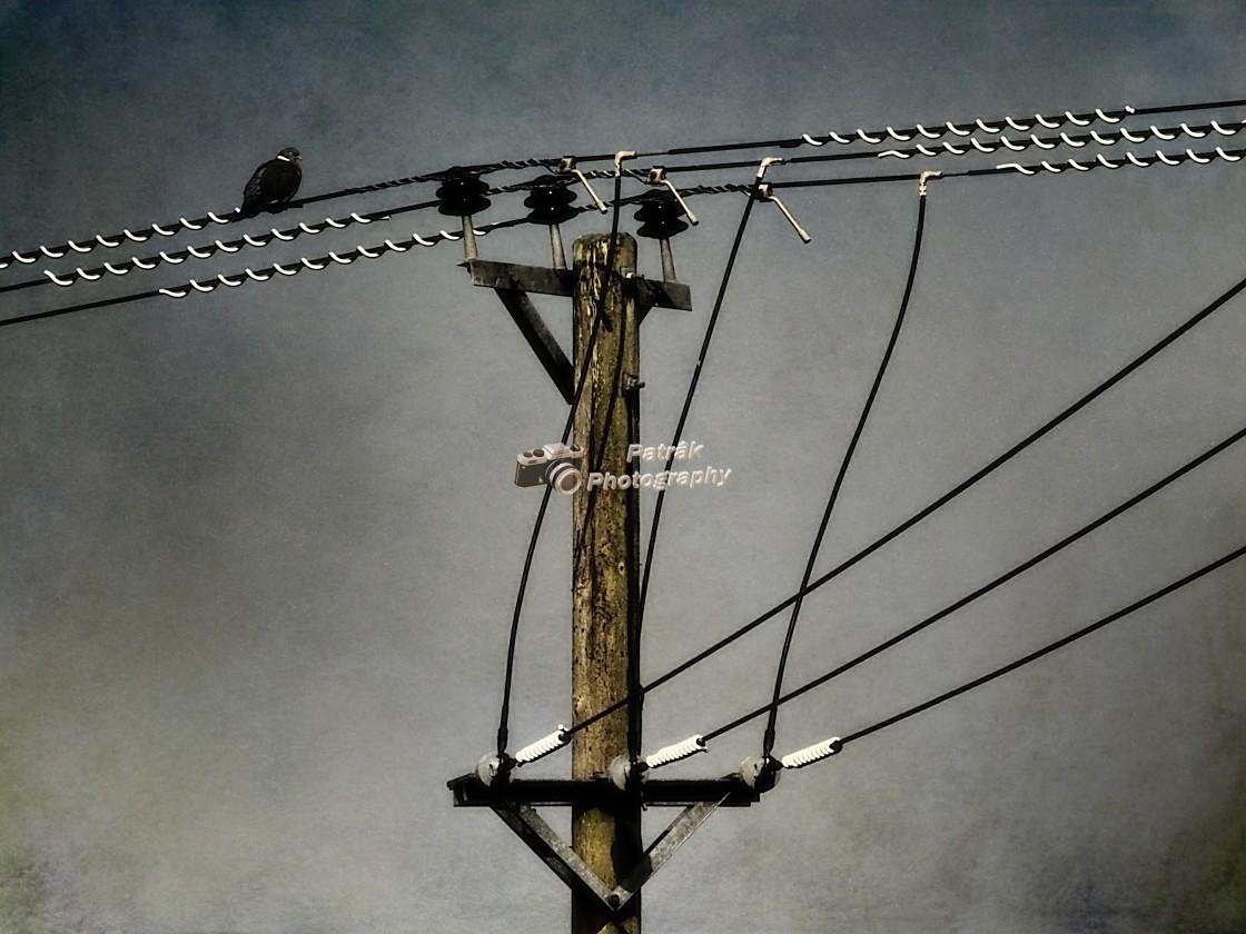 """Telegraph Pole"" stock image"