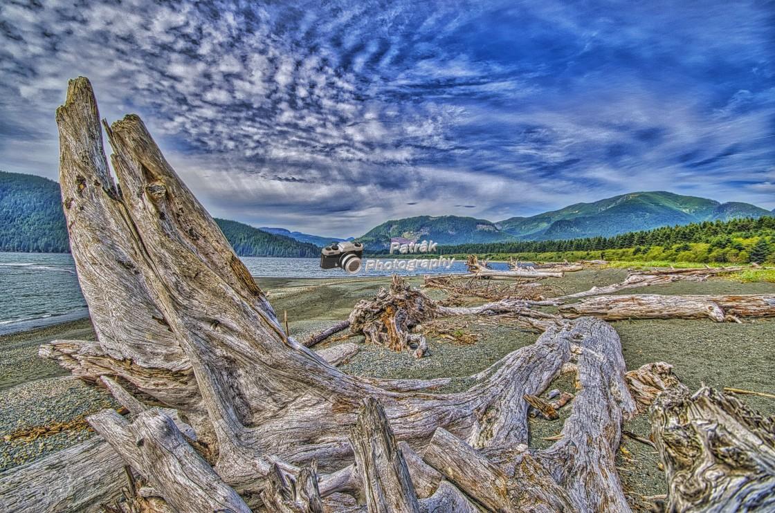 """Beach Driftwood - St Juan River, Vancouver Island, BC"" stock image"
