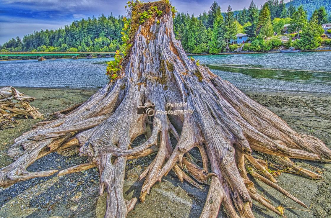 """Driftwood Volcano"" stock image"
