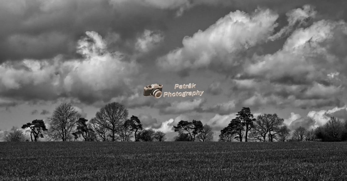"""Tree Cloudscape - Black & White"" stock image"