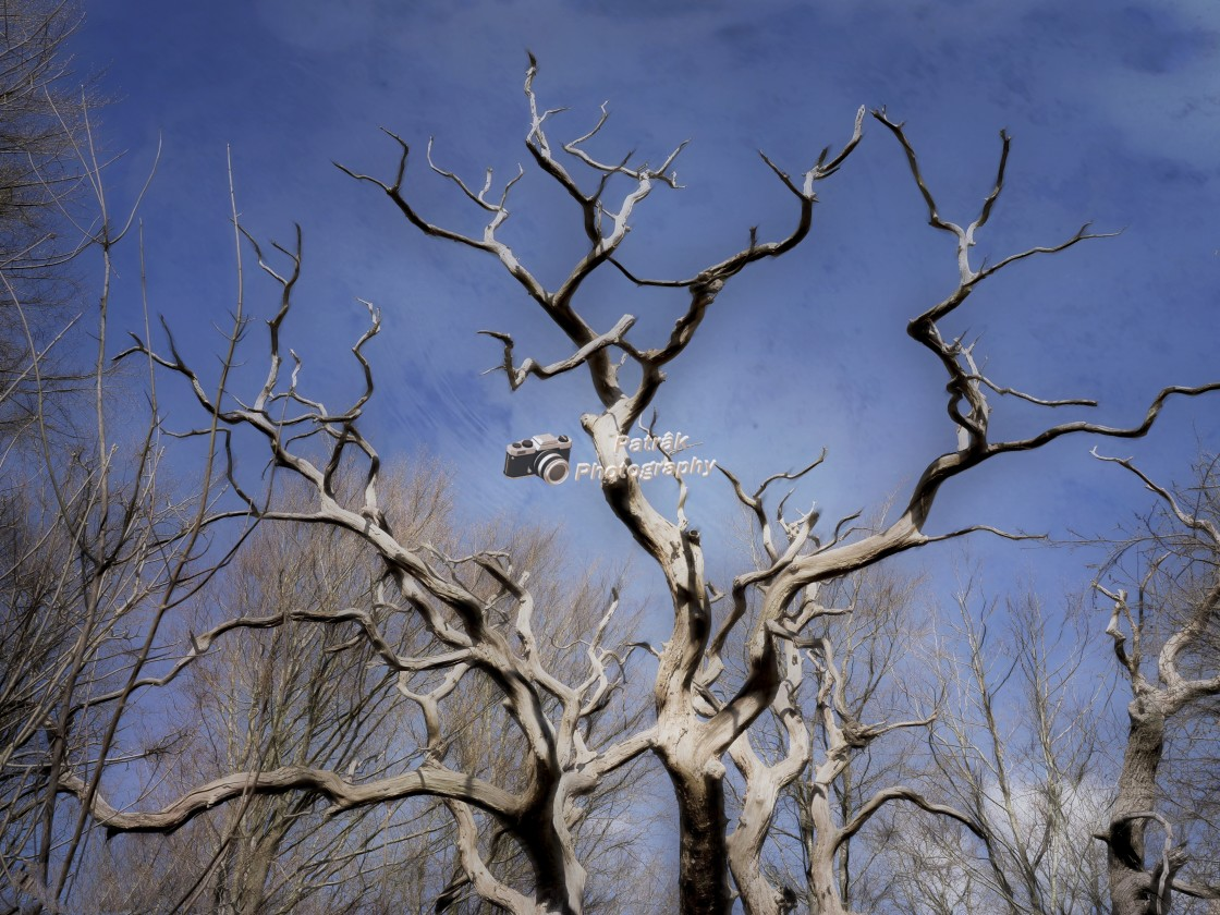 """""""Scuptural dead Tree - Savernake Forest, Wiltshire, England"""" stock image"""