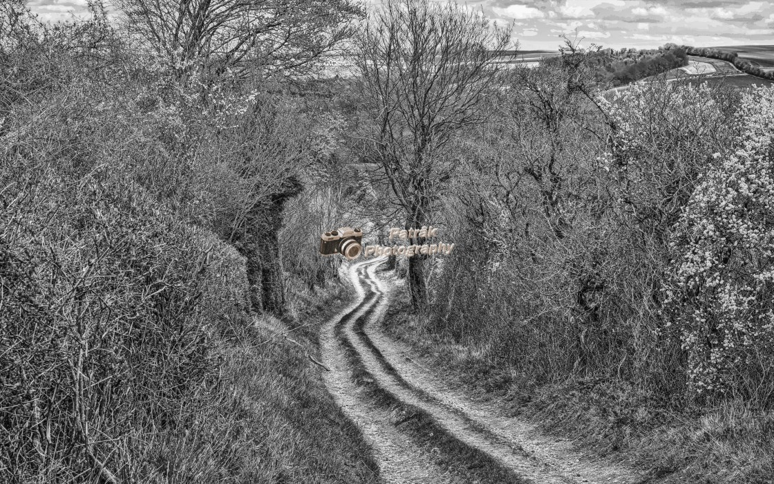 """Chalky Track - Boyton, Wiltshire, England"" stock image"