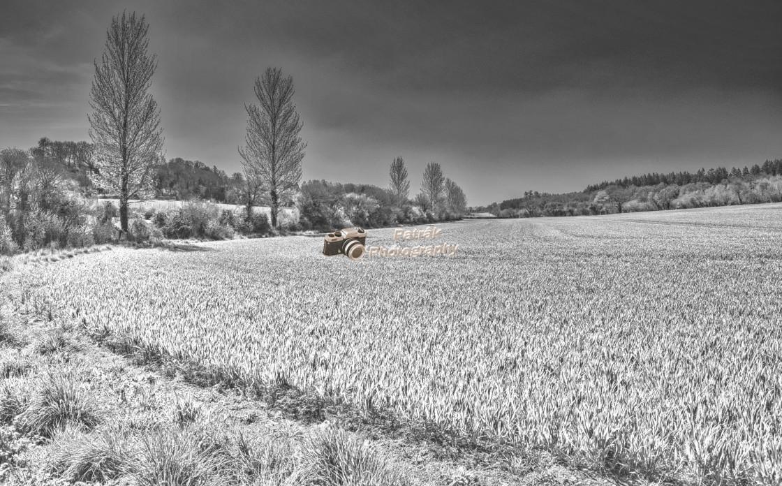 """Farmer's Field with Poplar Trees - Black & White"" stock image"
