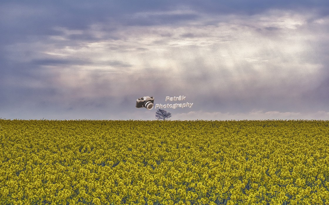"""""""Lone Tree Hill - Devizes, Wiltshire, England"""" stock image"""