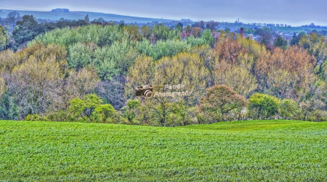 """Drews Pond Woods - Devizes, Wiltshire, England"" stock image"