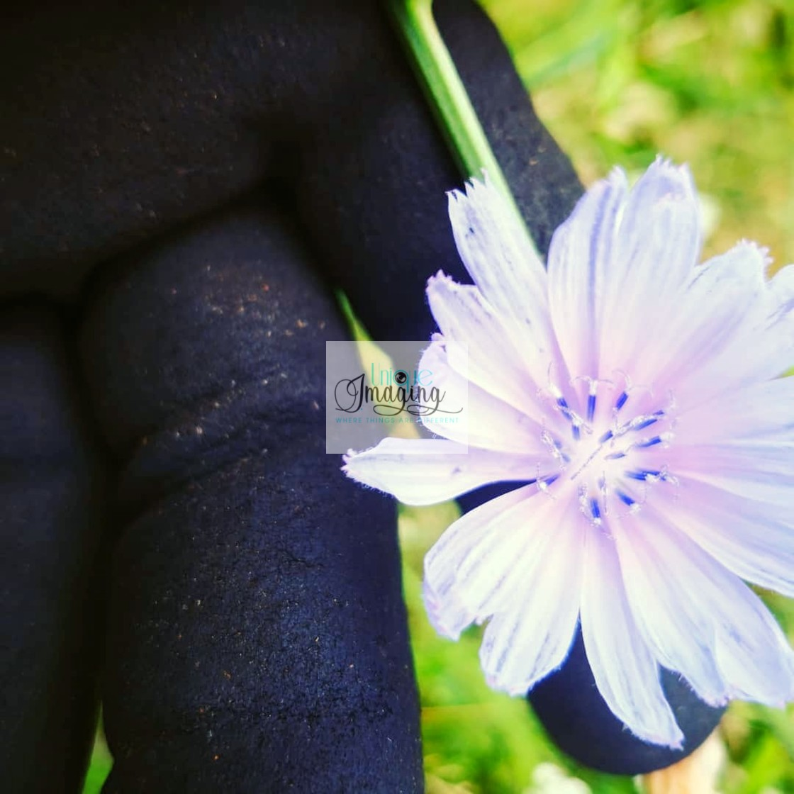 """Cornflower"" stock image"