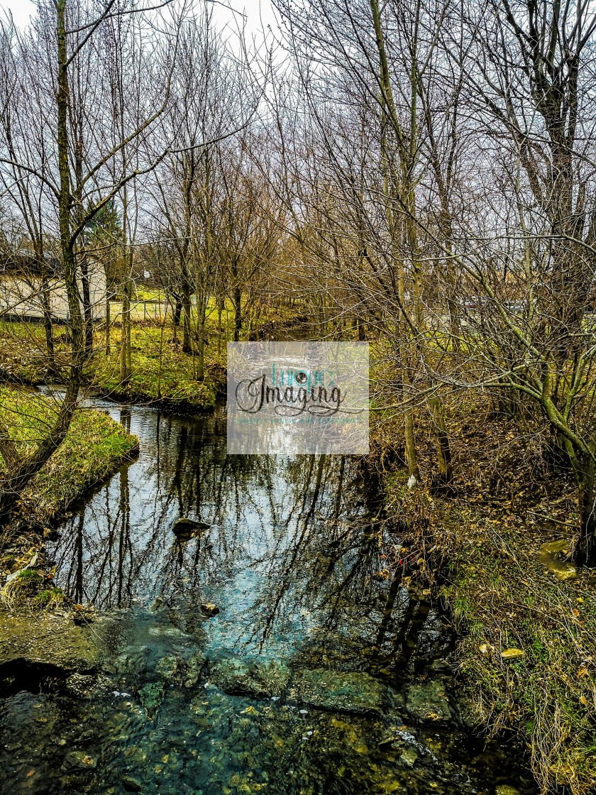 """""""A Spring Creek"""" stock image"""