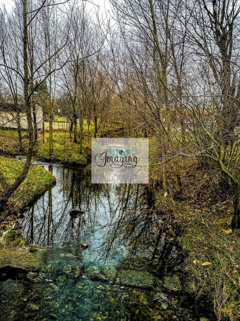 """Spring overtake a Creek"" stock image"