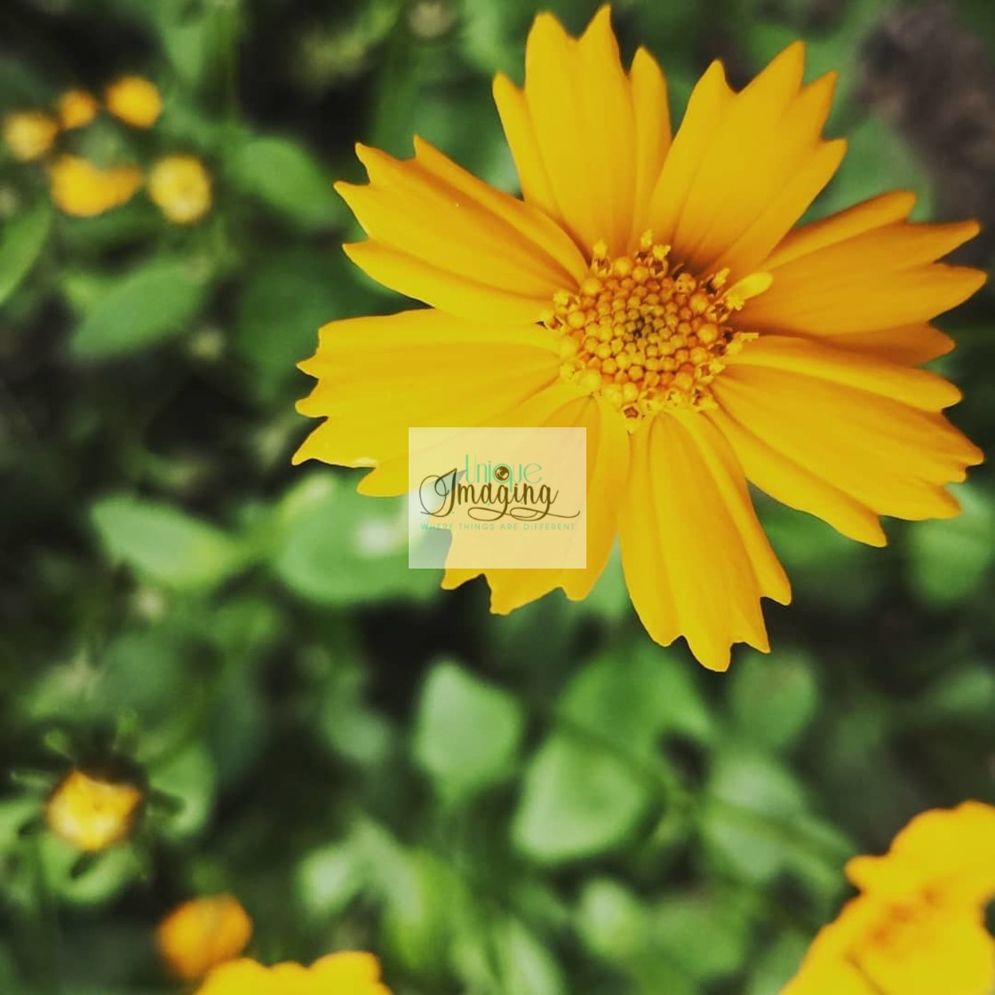 """""""A touch of yellow"""" stock image"""