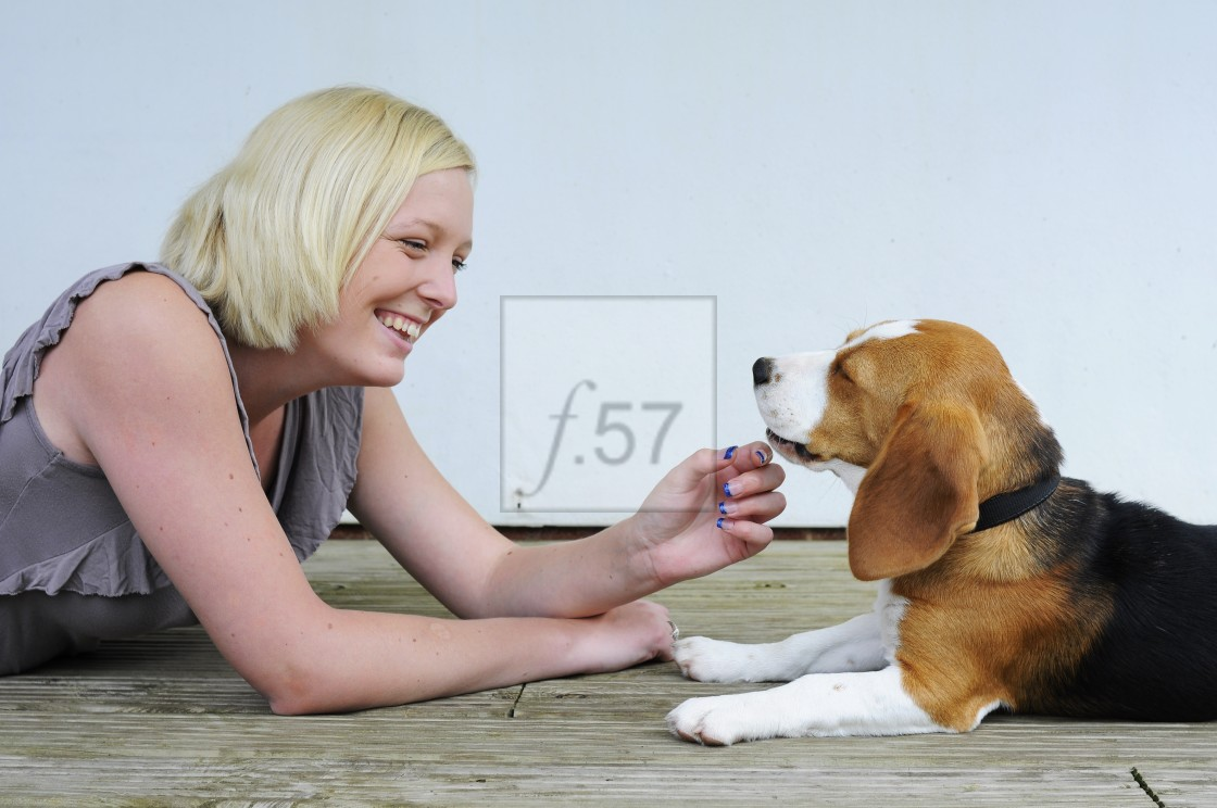 """""""Woman playing with her pet Beagle whilst puppy training"""" stock image"""