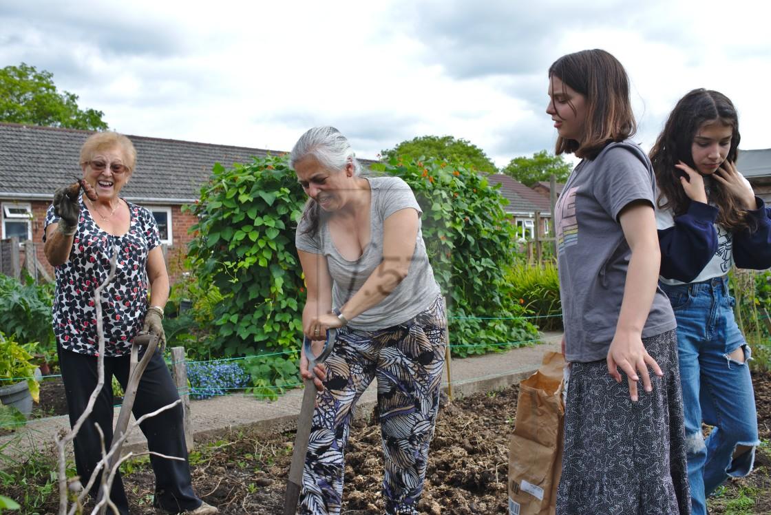 """Three generations of women harvesting allotment produce"" stock image"