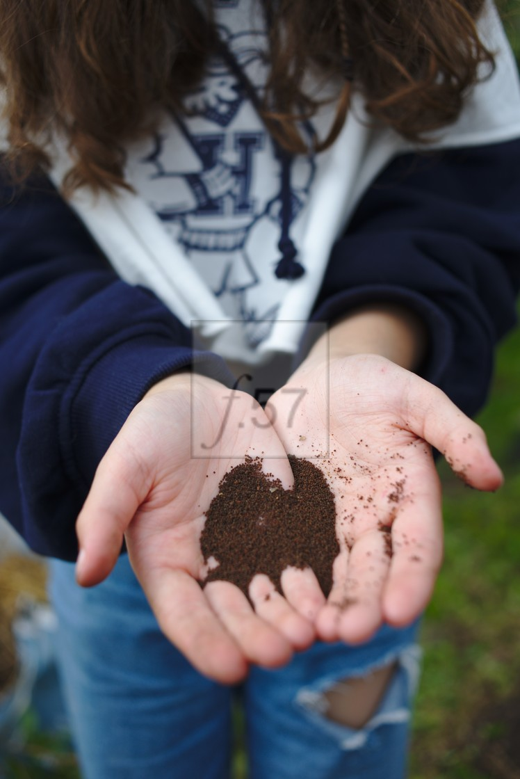 """Girl holding poppy seeds in her hands"" stock image"