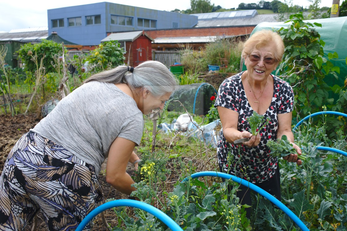 """""""Family allotment women picking vegetable harvest"""" stock image"""