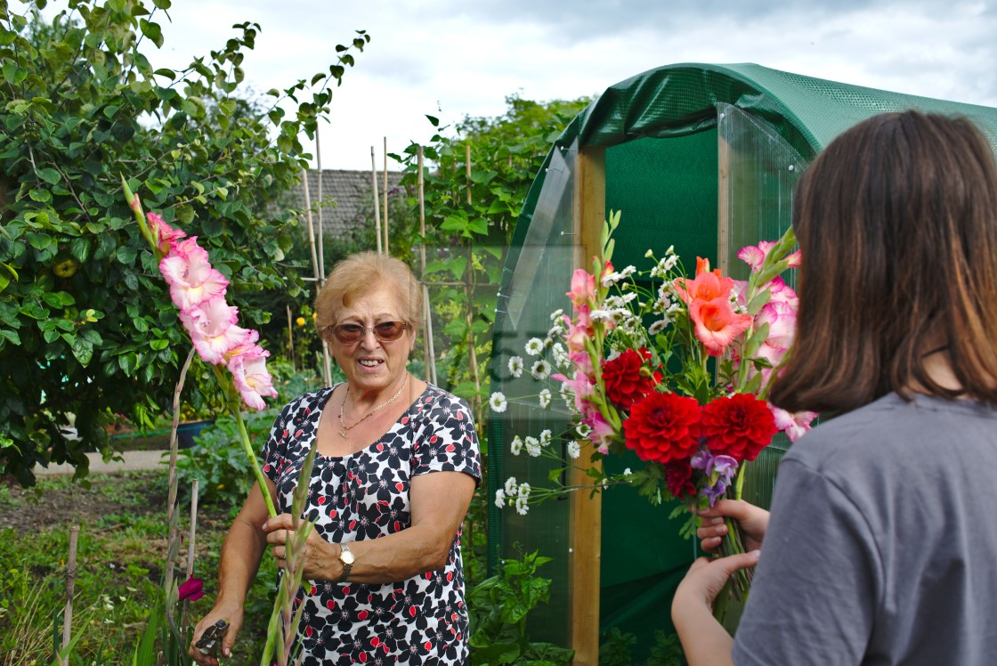 """""""Older woman at allotment with her granddaughter"""" stock image"""