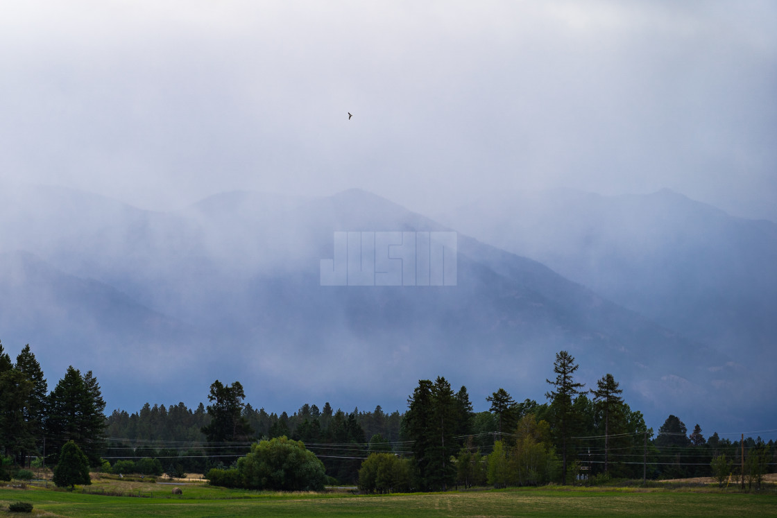 """Bird flying over a misty morning in the mountains of Whitefish M"" stock image"